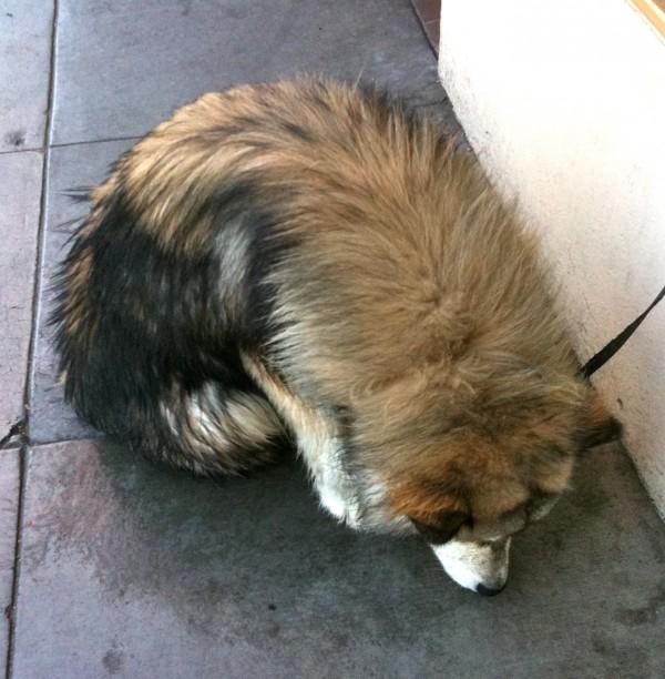 No!  Surely this is the exceedingly rare doggerpillar!