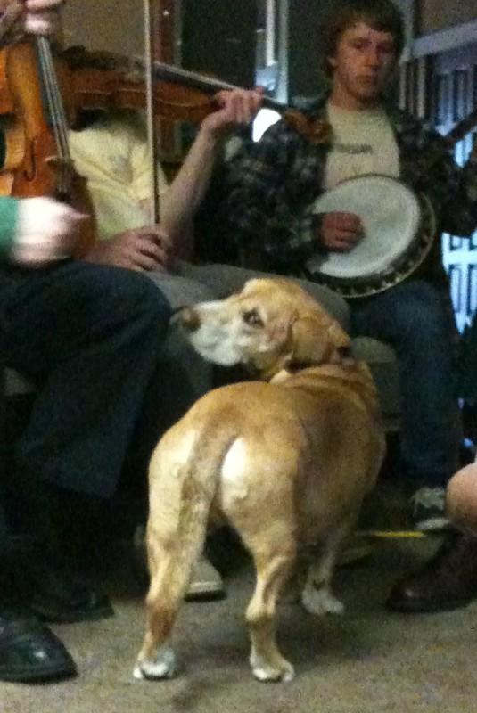 When I get a dog, I want a dog just like Milo!