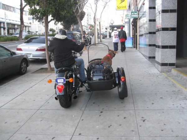 How awesome a dog do you have to be to stick your head out the window of a motorcycle?