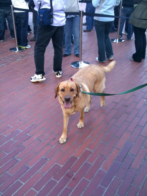 This was the line for a brief ride that was set up in Justin Herman Plaza in San Francisco: an urban zipline. The dog didn't go on it, but he did attempt to say hello to just about everyone who did.