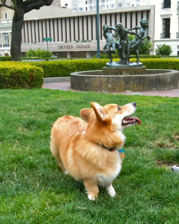 Pembroke Welsh corgi. The shape of a corgi reminds me of my favorite fuzzy pillow bolster thingie from when I was a kid. With legs. And a tongue.