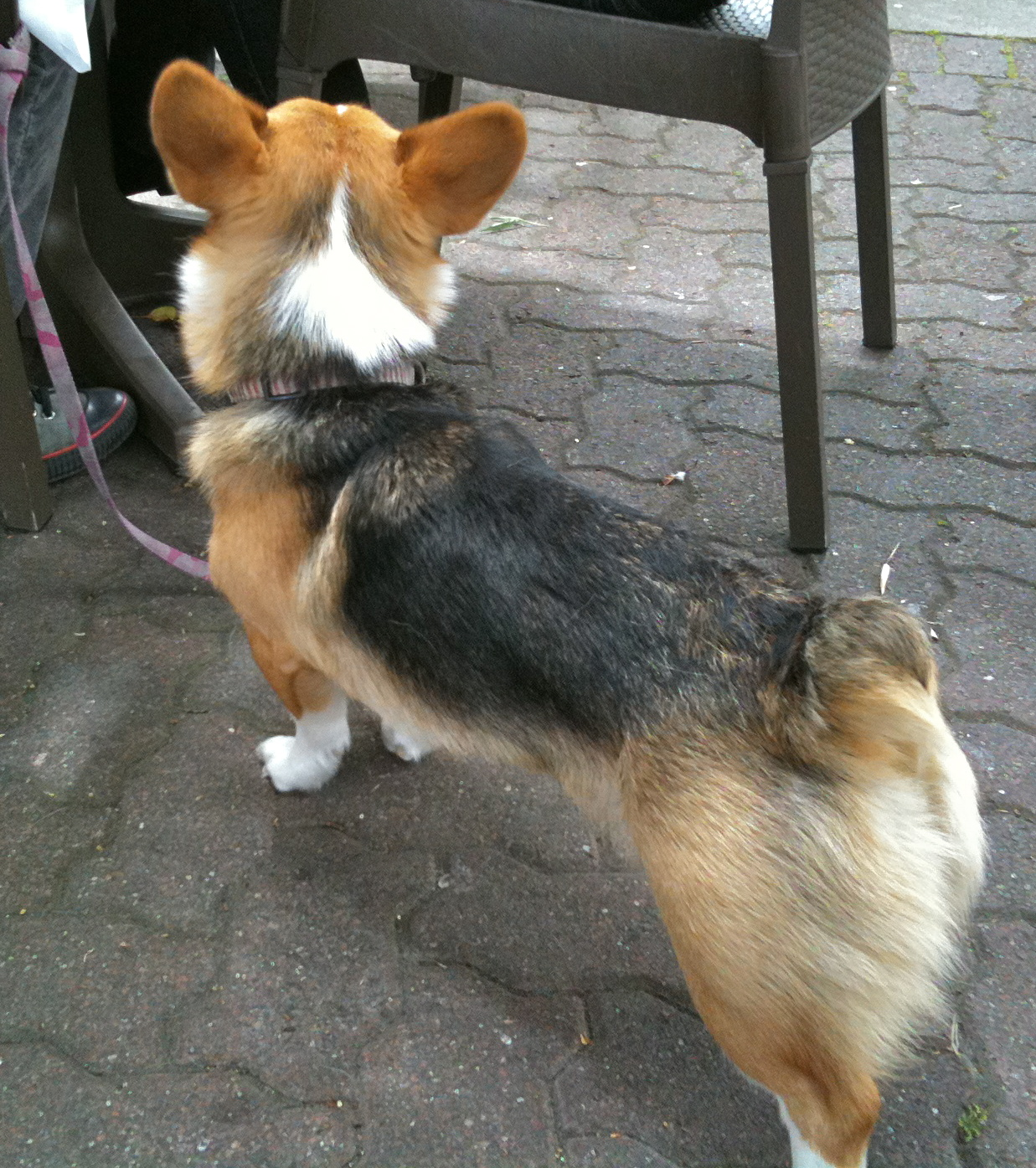 Image Result For Does Dog Food Go