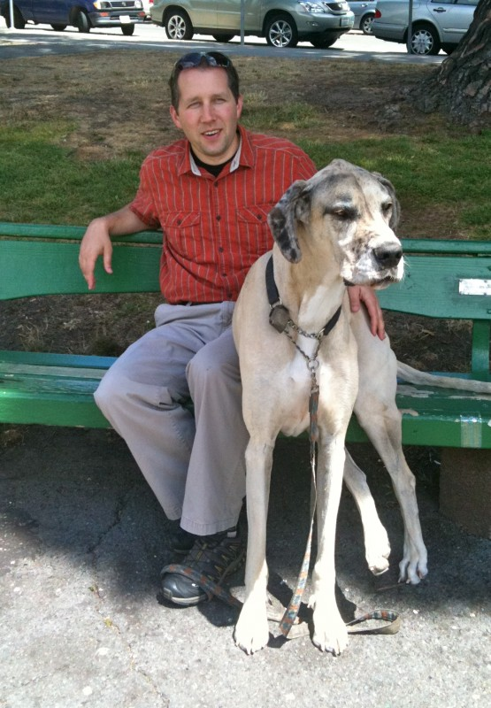Great Dane on a Park Bench
