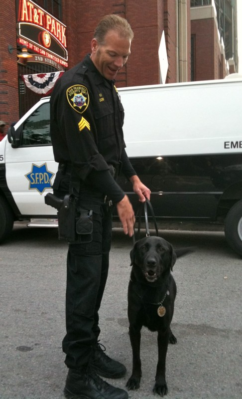 Policeman and Labrador Retriever Police Dog