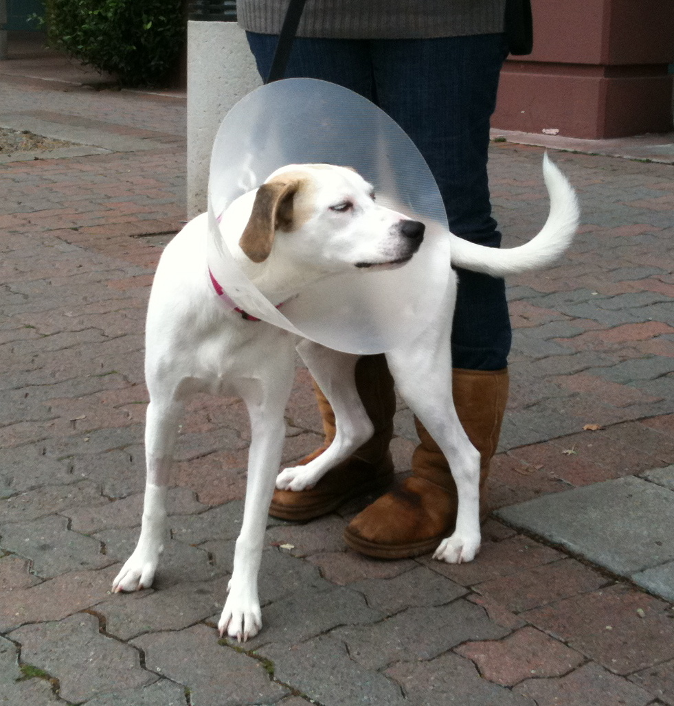Dog Of The Day Sammie The Foxhound Mix The Dogs Of
