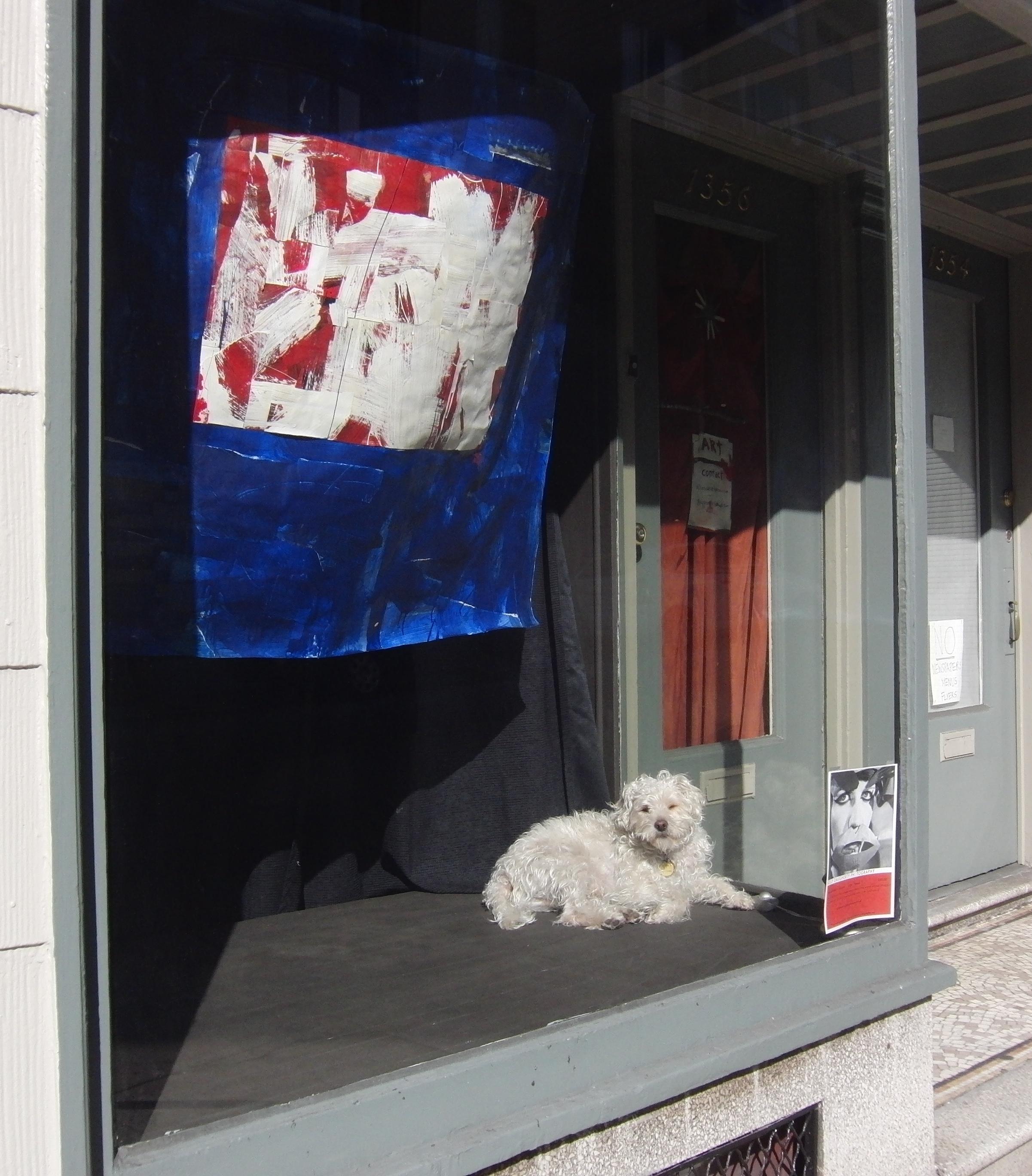 Maltese in a Shop Window