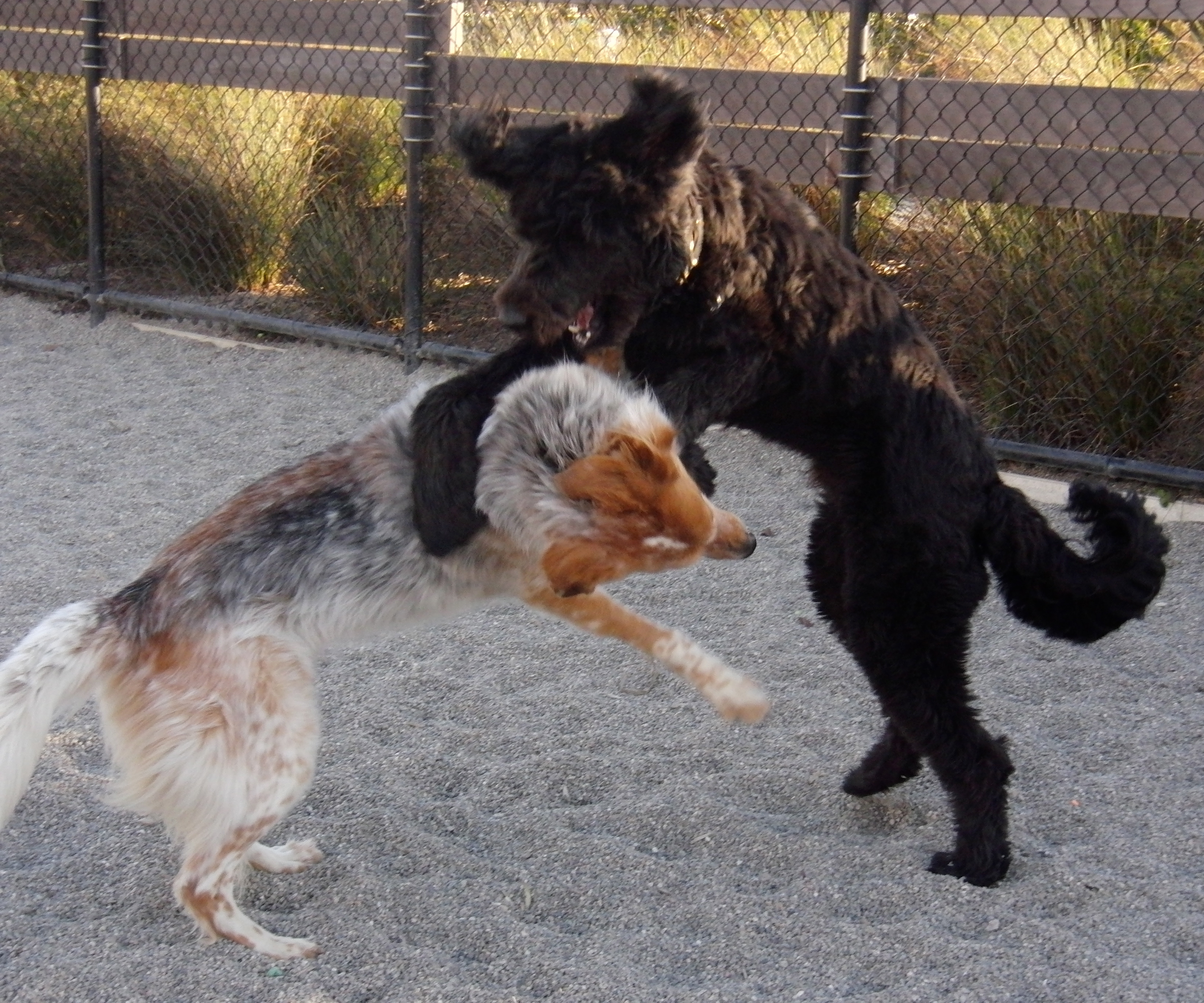 AH HAH! I use the standing dog martial arts move! - The Dogs of San ...