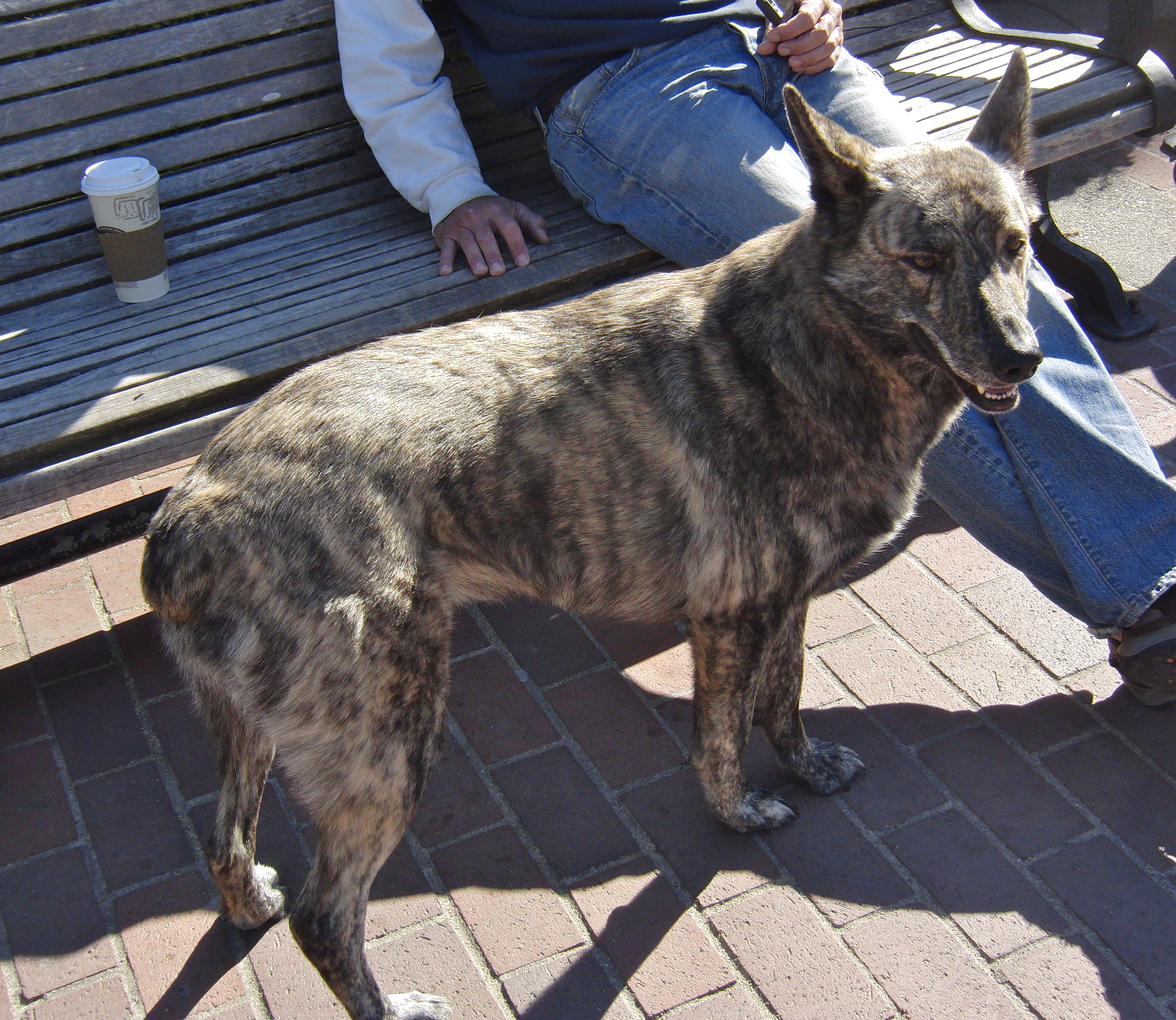 Aww Yeaaaaah Life Is Good The Dogs Of San