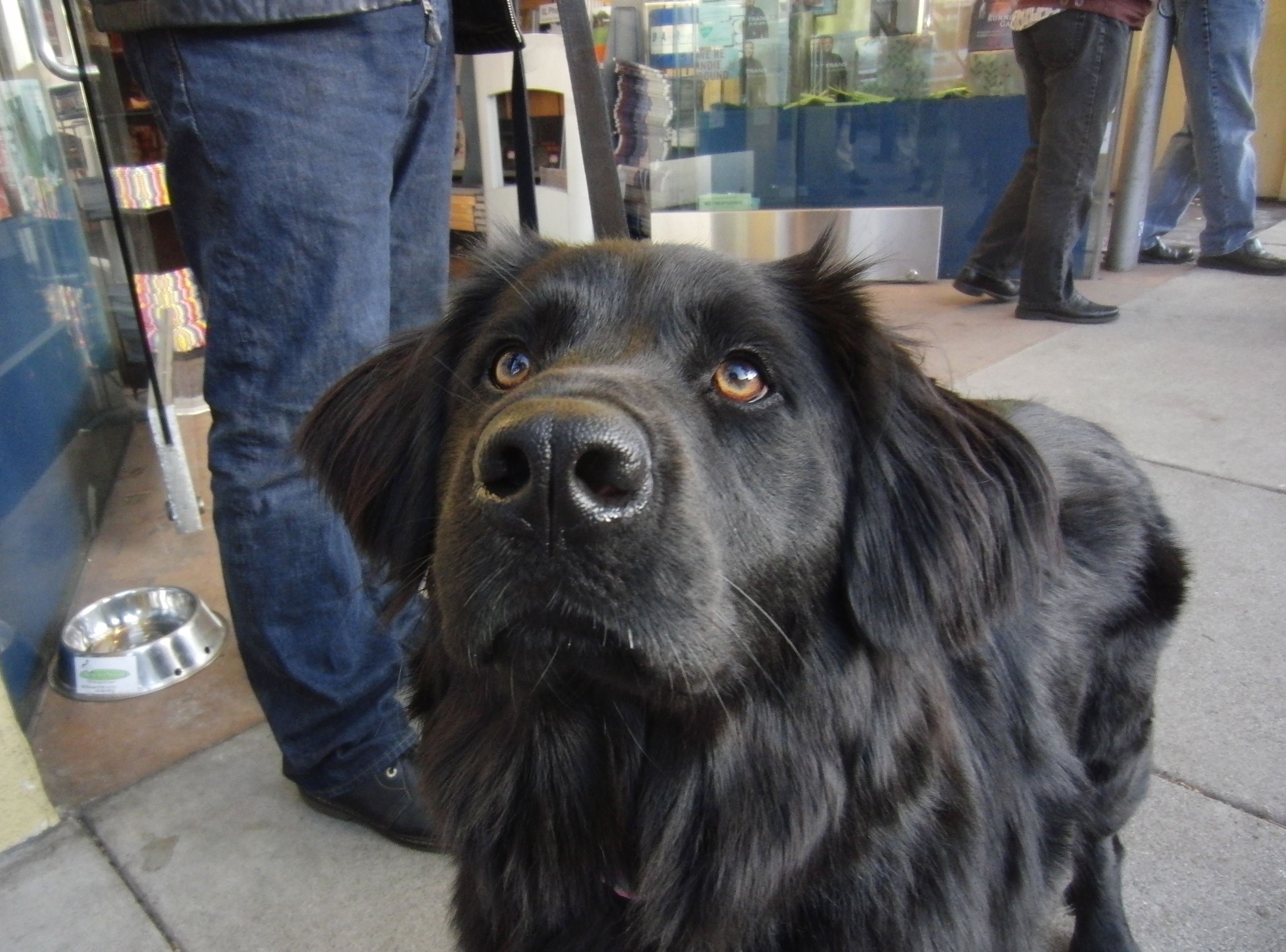 Will Gaze Adoringly For Treats The Dogs Of San