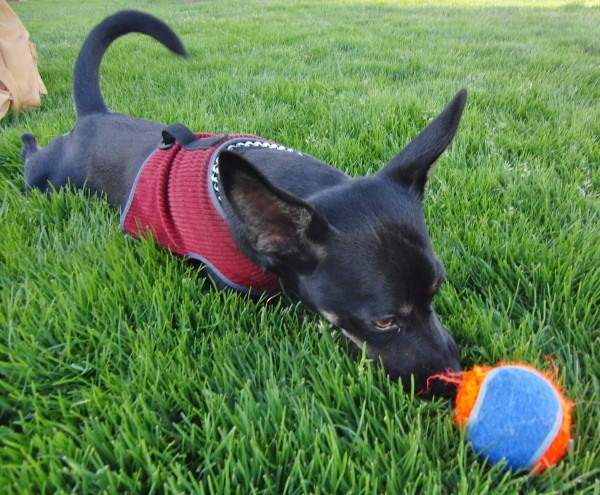My ball is my best friend. (Well, aside from Mom.) It is my life. I ...
