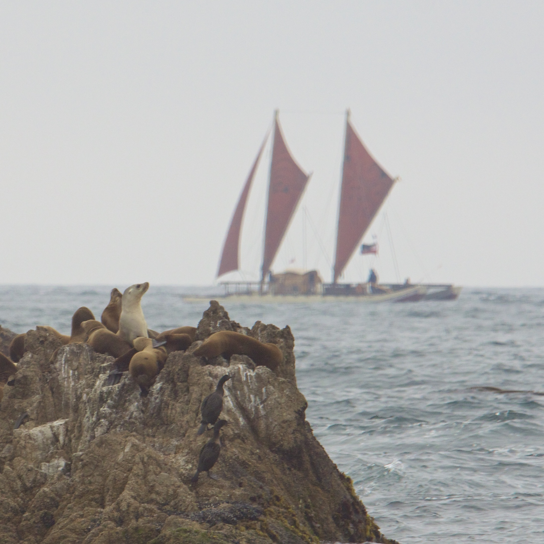 Sea Lion Rock With Boat