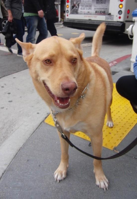 Dingo Mix