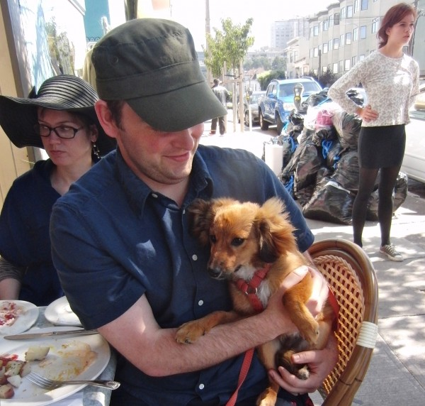 Dachshund/Pomeranian Mix