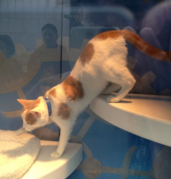 Kitty in a Window