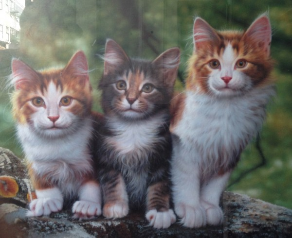 Painting of Kitties