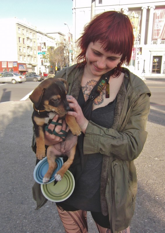Chihuahua/Dachshund/Pit Bull Terrier Mix