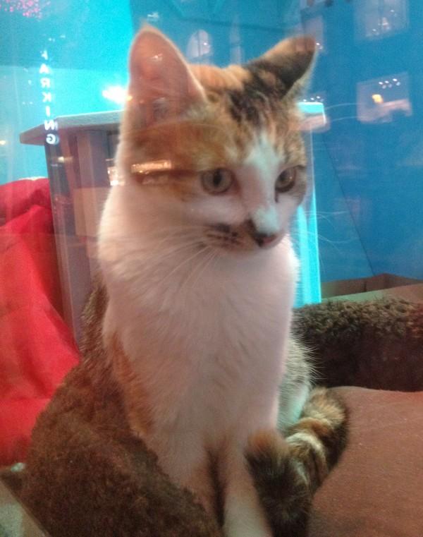 Macy's Window Kitty