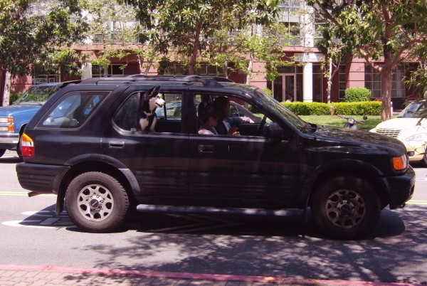 Husky in SUV