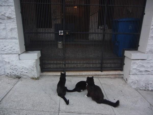 Three Black and White Kitties