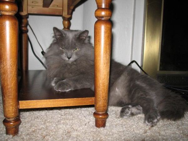 Lady Jane the Cat Hatches Evil Plans From Under an End Table