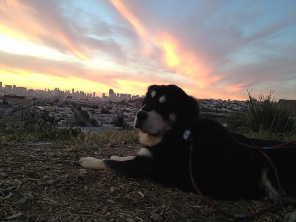 Lambeau on Bernal Heights at Sunset