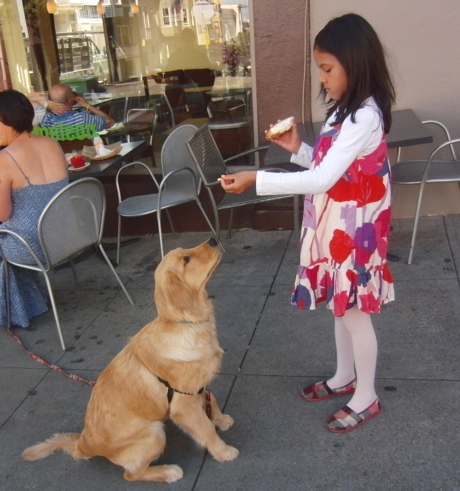 Little Girl Feeding 6-Month-Old Golden Retriever