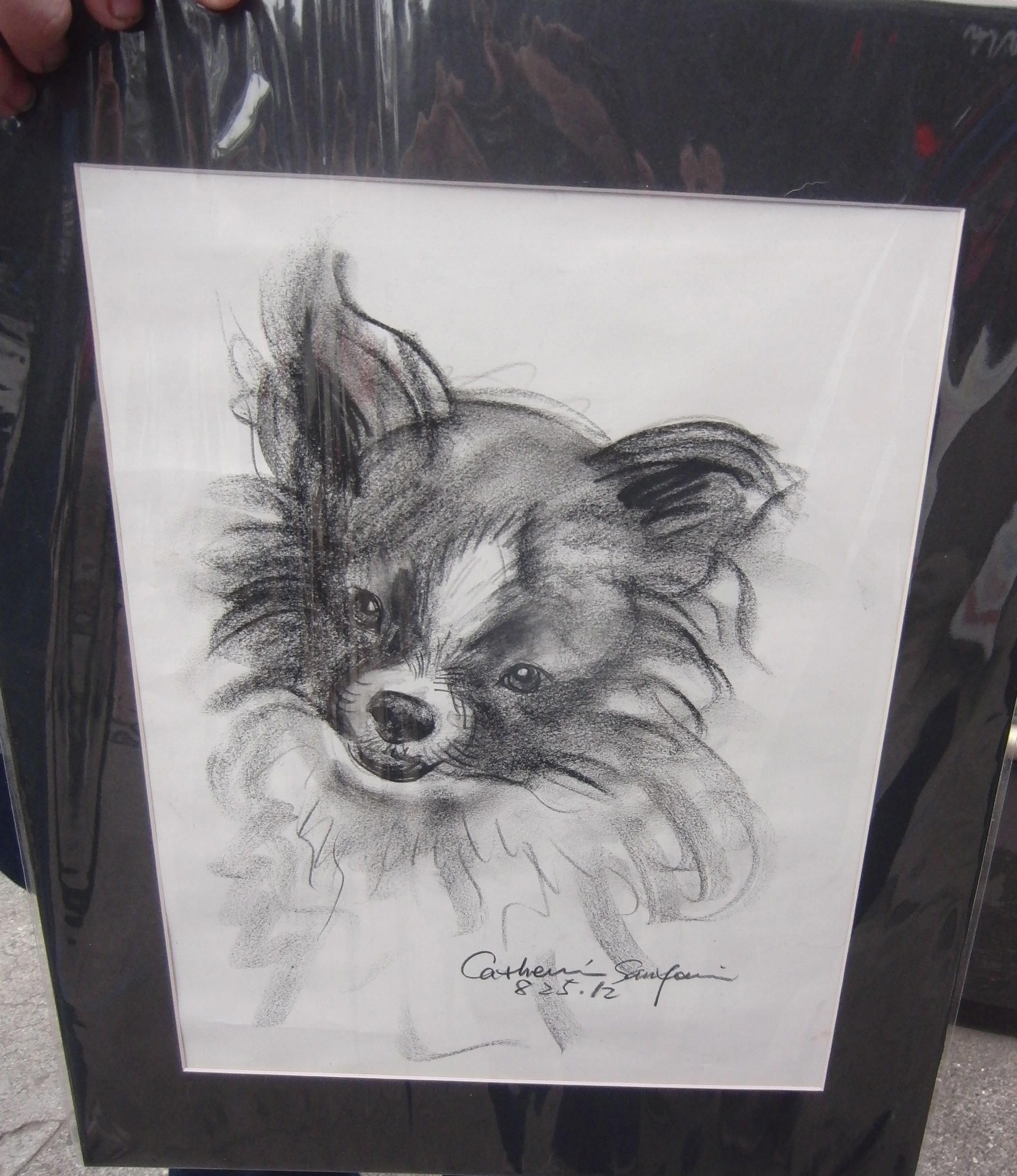 Charcoal Drawing of a Pomeranian
