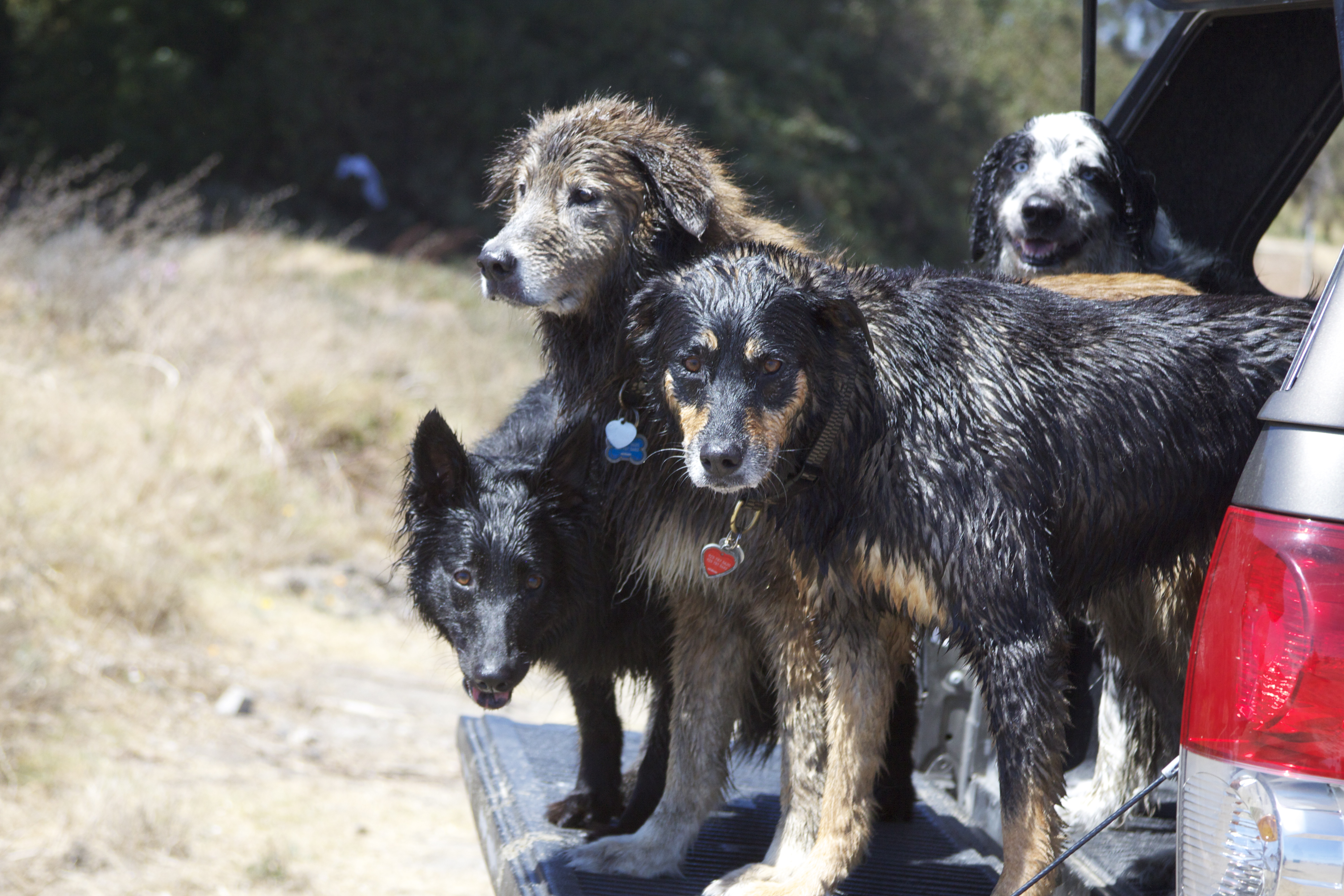 A Variety of Mixed-Breed Dogs