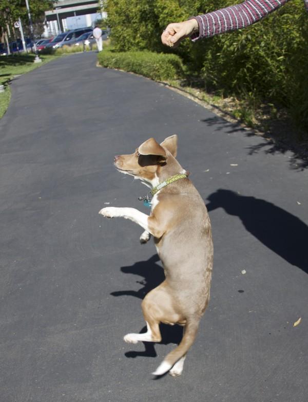 Dancing Lilac/Khaki Beagle