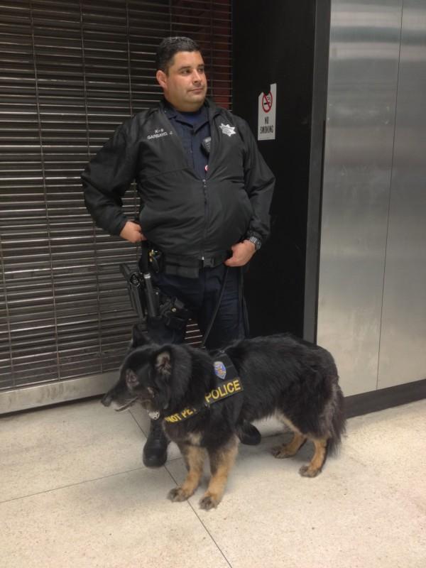 Long-Haired German Shepherd Police Dog