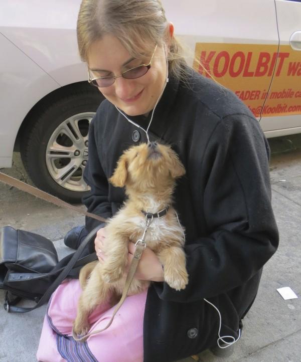 Golden Retriever Mix Puppy