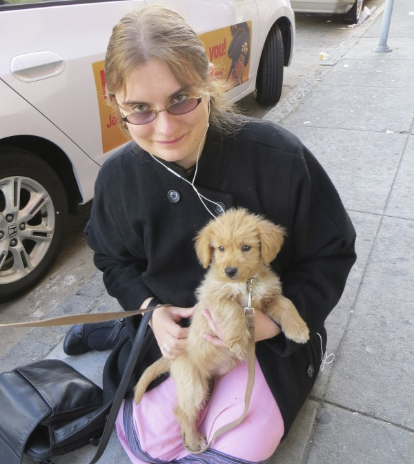 Golden retriever mix puppies bay area