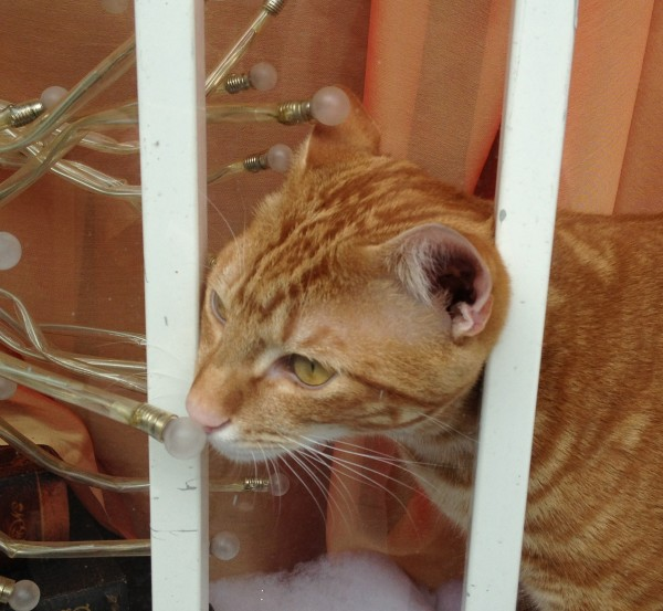 Marmalade Tabby Cat in a Barred Window
