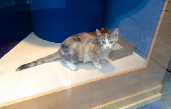 Kitten from the San Francisco Union Square Macy's Window Display of  2012
