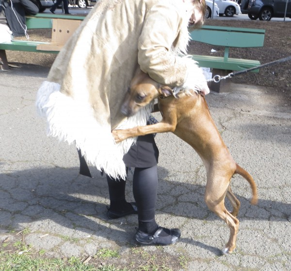5-Month-Old Rhodesian Ridgeback With a White Spot On Her Chest Hugging a Woman