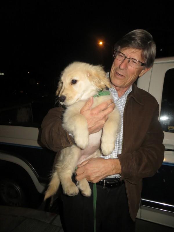 3-Month-Old Golden Retriever Puppy