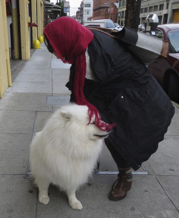 Male Fluffy White Samoyed