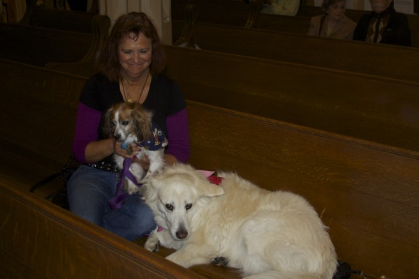 Samoyed and Cavalier King Charles Mix in a Church Pew