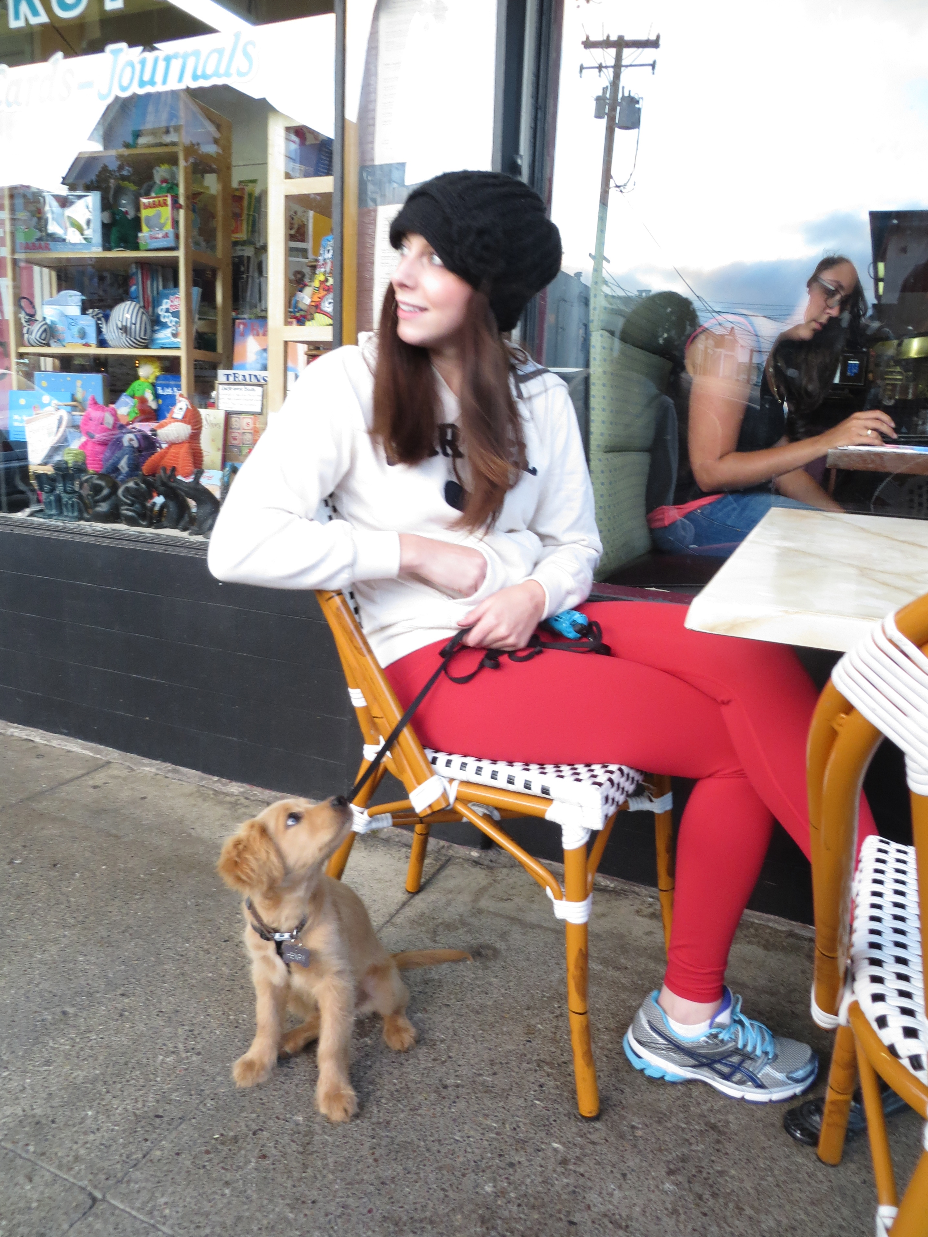 Adorable Miniature Golden Retriever Puppy