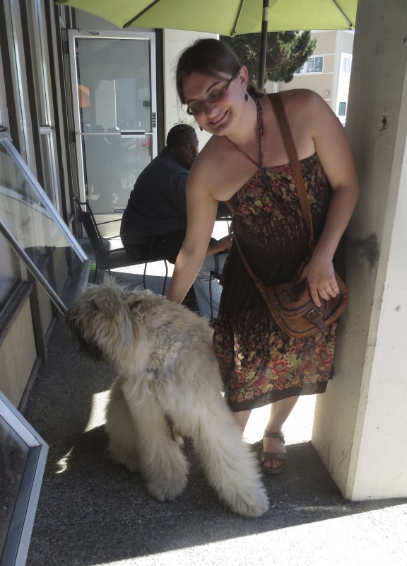 Fawn Bouvier des Flandres And Woman