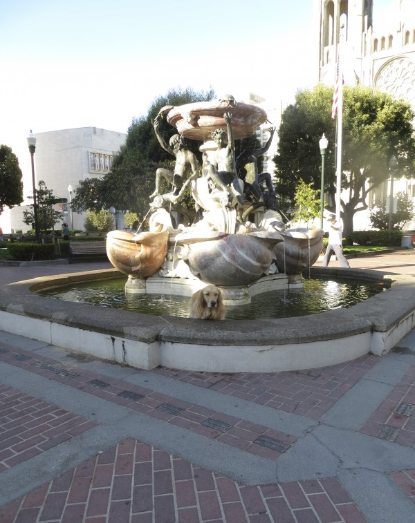 Golden Retriever in the Fountain in Huntingdon Park, Nob Hill, San Francisco