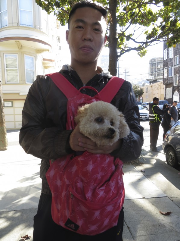 Man Wearing Pack With White Miniature Poodle In It
