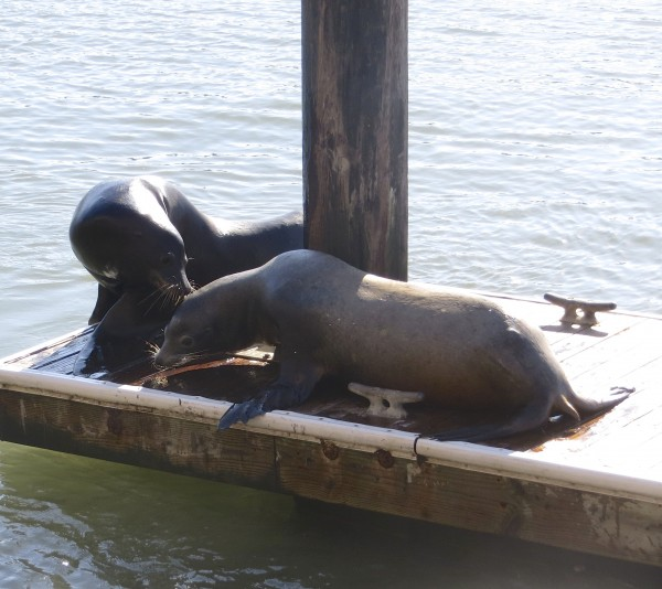 Two Sea Lions on a Dock