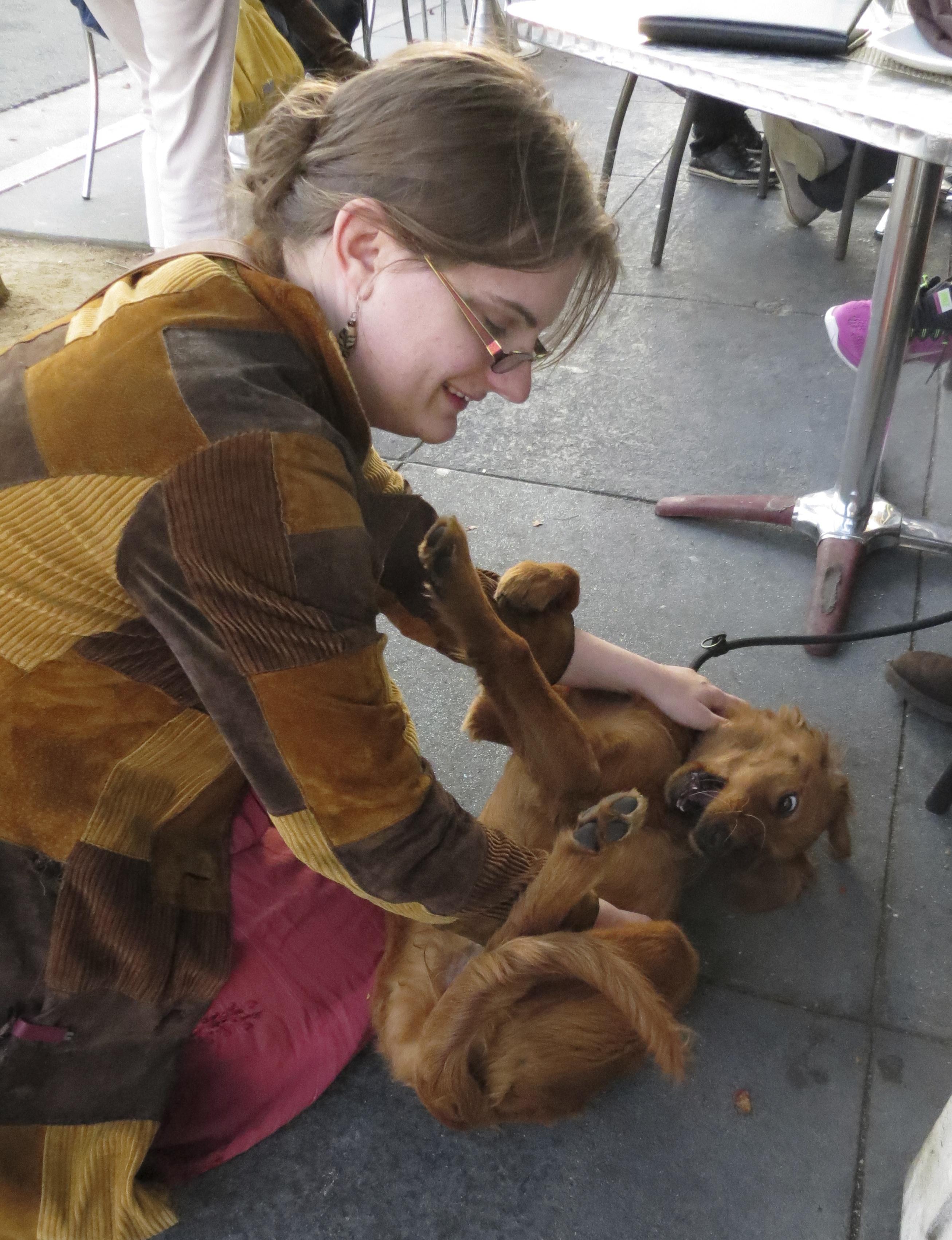 Five-Month-Old Irish Setter Puppy
