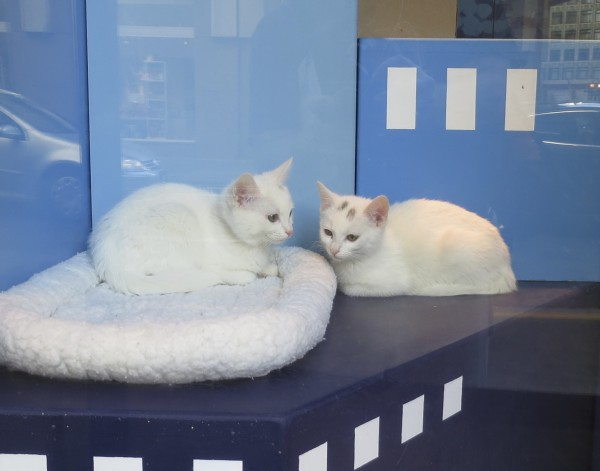Two White Cats with Black Marks on Their Heads