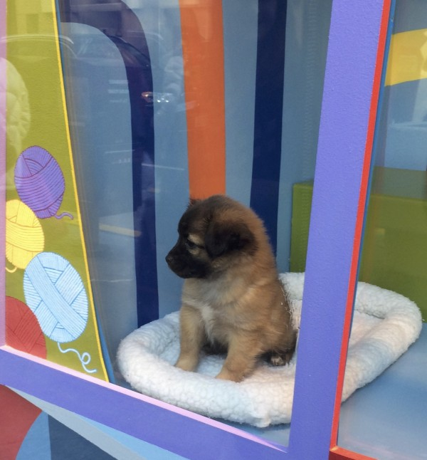 Adorable Puppy in a Window