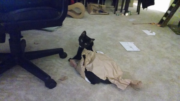 Tuxedo Kitten Playing in Paper Bag