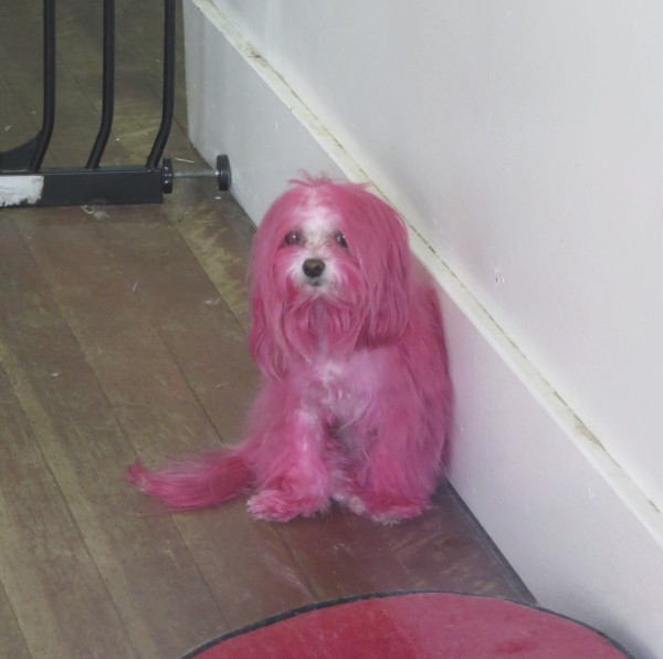 Pink Poodle. Really.