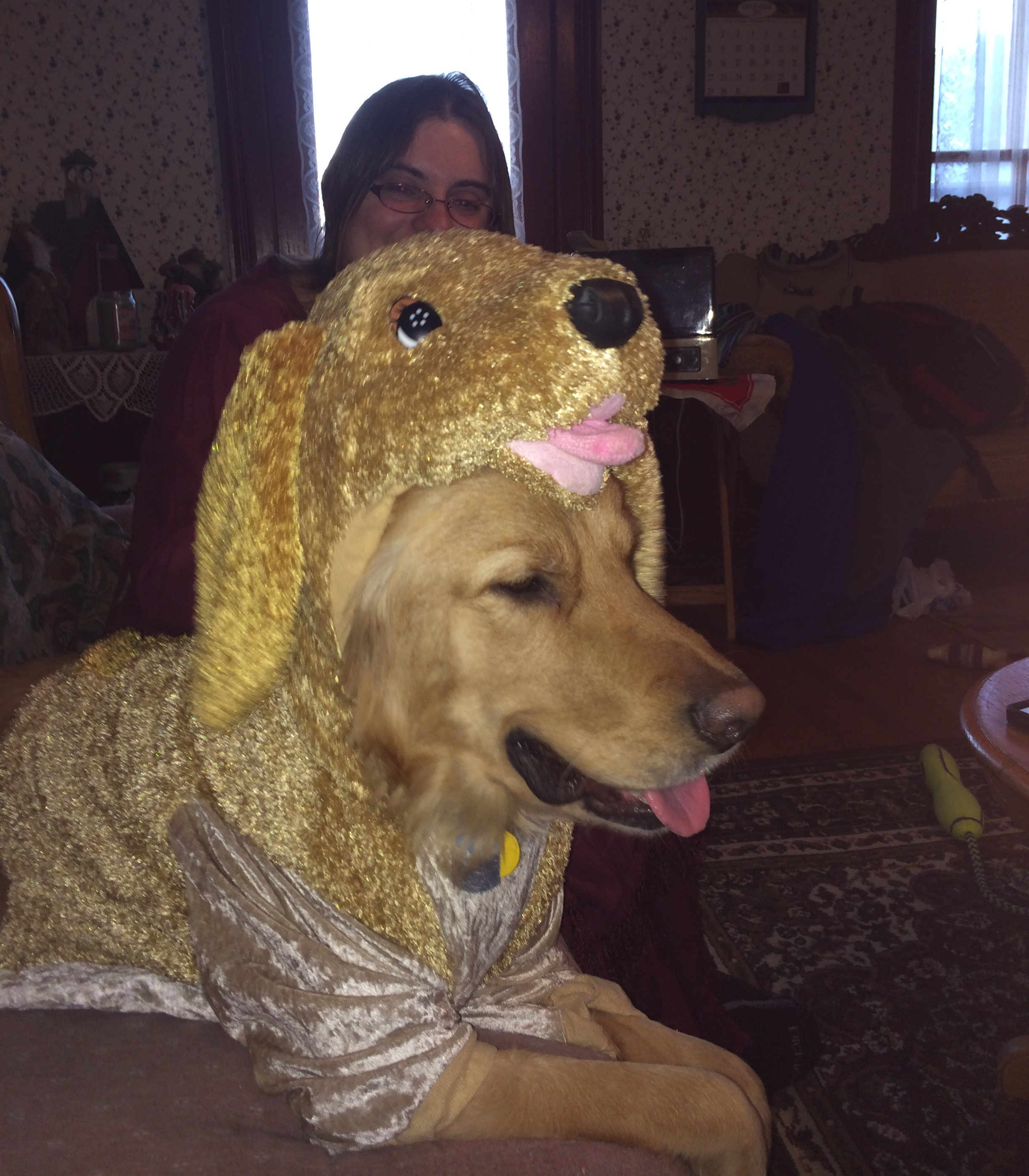Golden Retriever Dressed in a Golden Retriever Costume