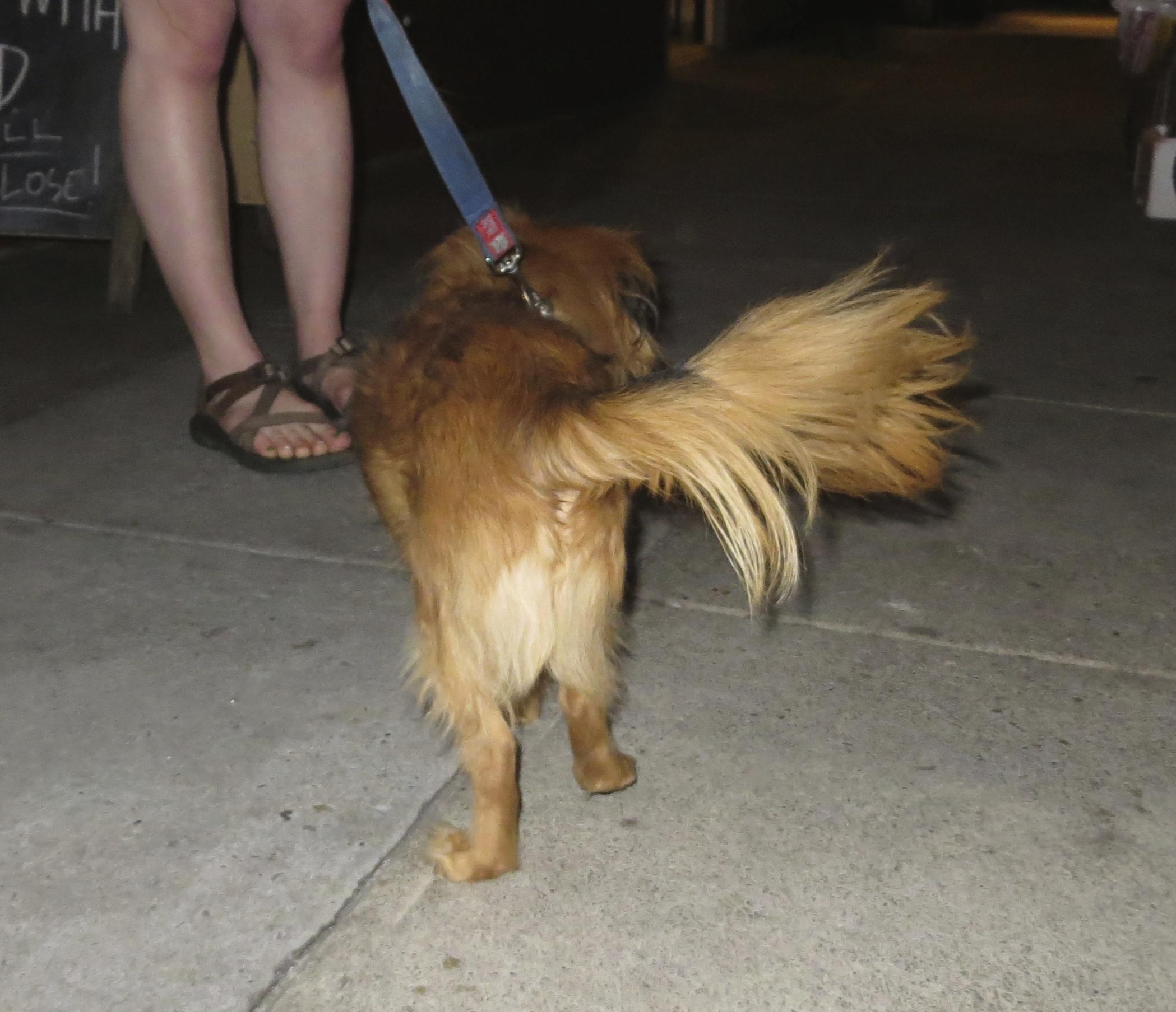 Fluffy Small Dog Backside